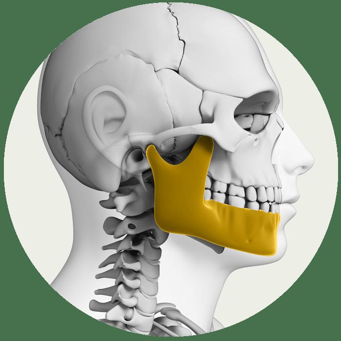 jaw-bone-graphic